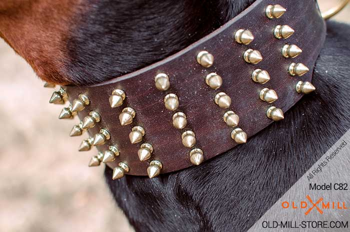 Buckle Collar with 5 Rows Gold-like Spikes and D-ring for Leash