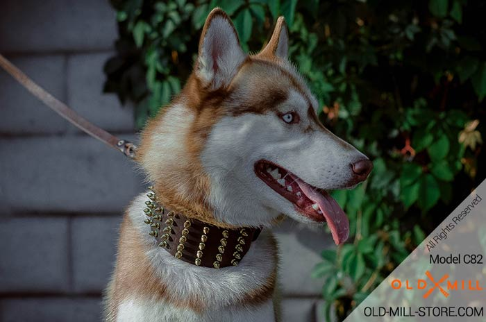 Everyday Spiked Leather Husky Collar