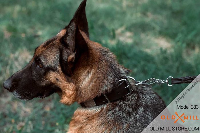 Stylish German Shepherd collar for everyday walking