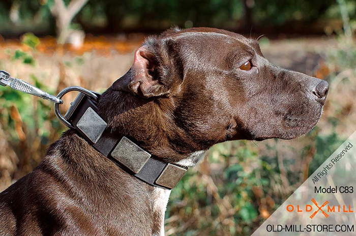 Leather Dog Collar with Large Silvery Nickel Plates for American Pitbull