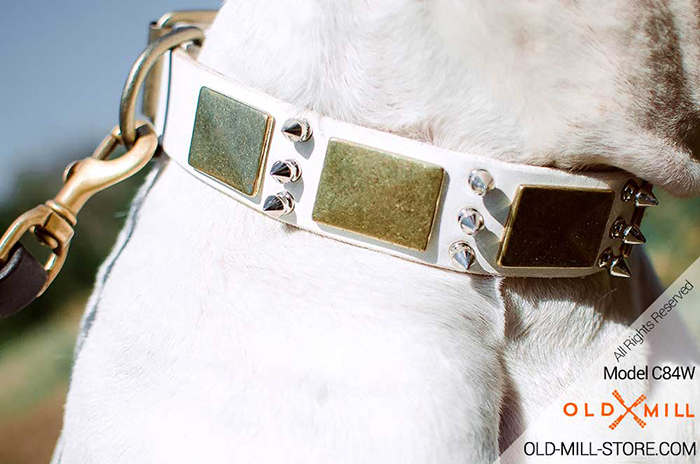Dog Collar with Durable D-Ring