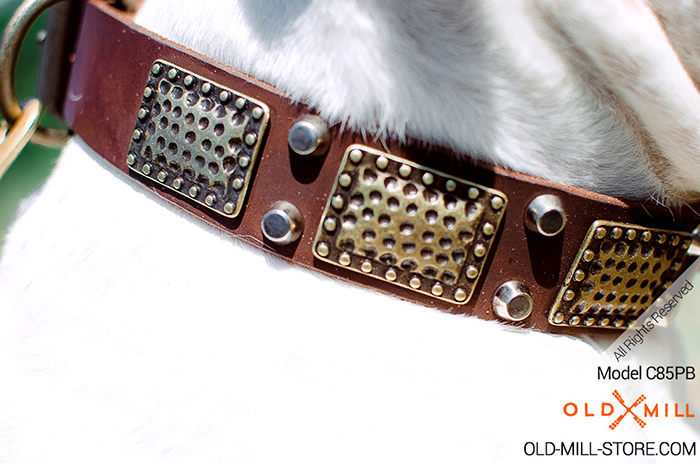 Designer Leather Dog Collar with Massive Plates