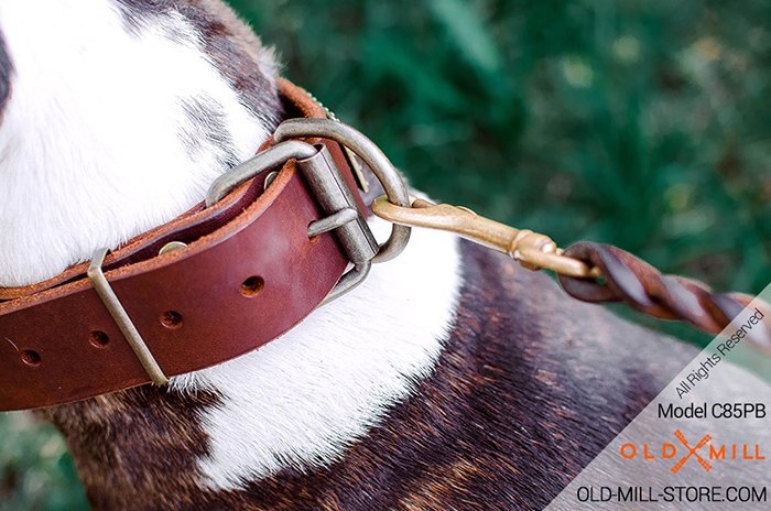 Dog Collar with Brass Buckle