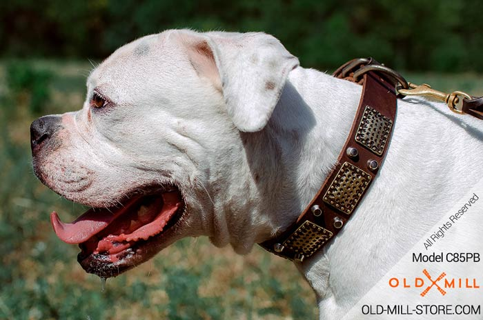 Vintage Leather Collar for American Bulldog
