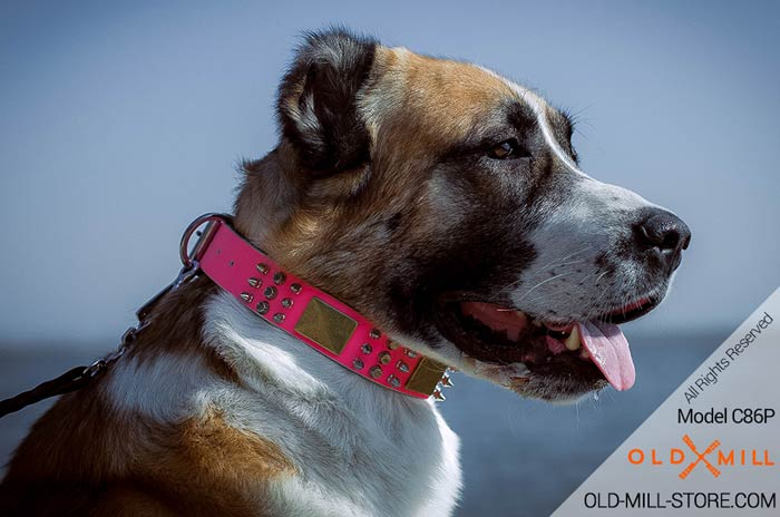 Designer Pink Collar for Central Asian Shepherd