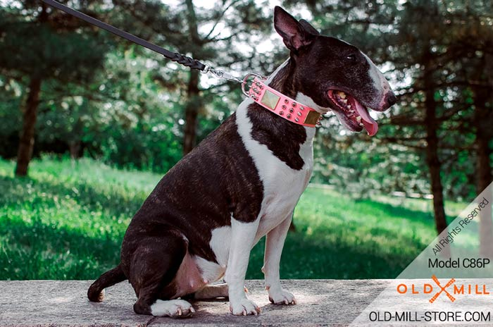Fashion Pink Collar for Bullterrier Female Dog