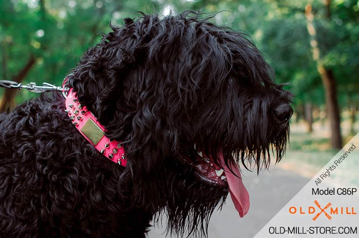Pink Collar for Black Russian Terrier Girl Dog