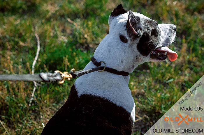 Training Dog Collar Choker for Pitbull