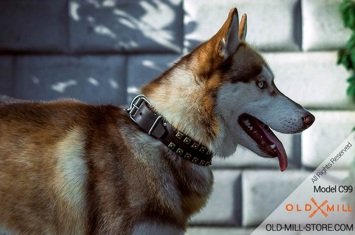 11/2 inch Wide Leather Dog Collar Siberian Husky