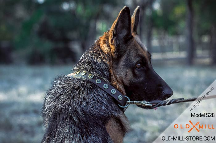 1 inch Wide Leather Collar for German Shepherd
