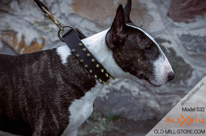 Leather English Bull Terrier Collar with Spikes