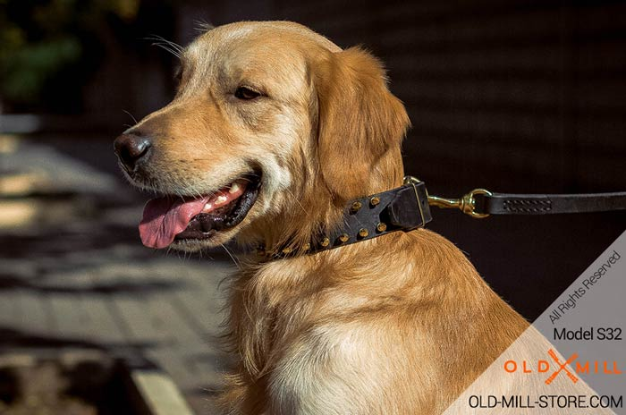 Gold Spiked Dog Collar for Golden Retriever