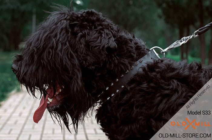 Black Russian Terrier Spiked Collar