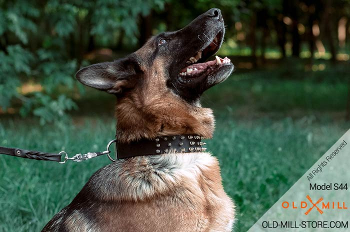 Black Leather Spiked Dog Collar German Shepherd