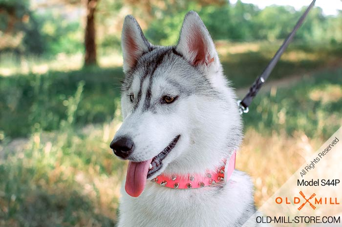 Siberian Husky Girl Collar with Spikes