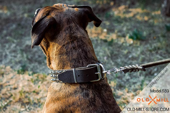 Fancy Dog Collar for Boxer