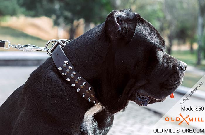 Designer Spiked Dog Collar for Cane Corso