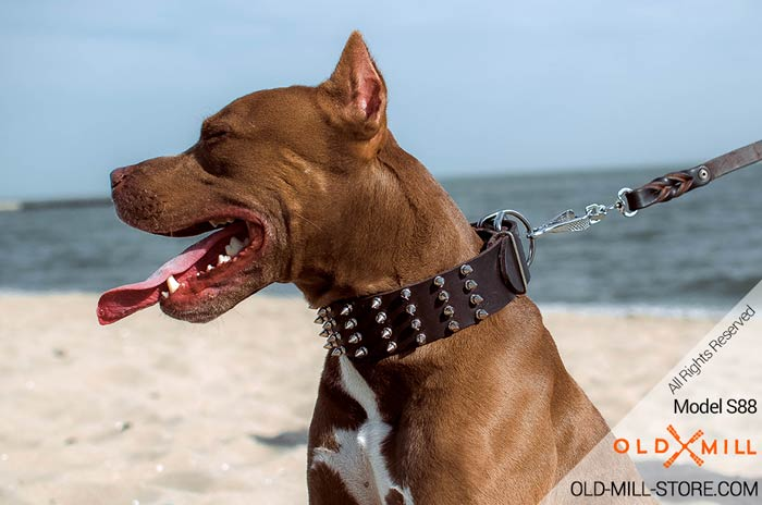 2 2/5 inch Wide Leather Spiked Pitbull Collar