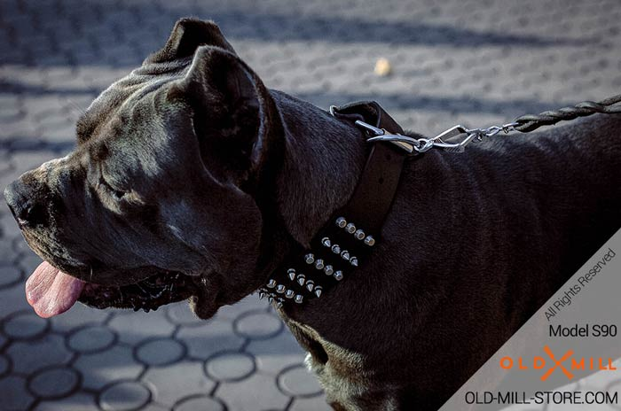 2 2/5 inch Leather Cane Corso Collar with Studs and Spikes