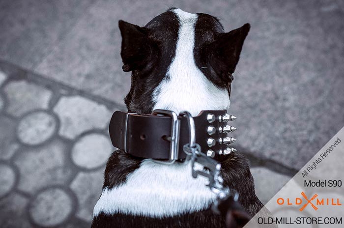 Buckle Collar Bull Terrier with D-ring for Leash attachment